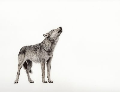 Call of the Coastal Wolf by Sarah Lawson