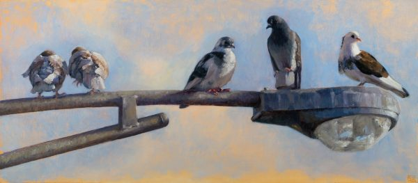 Pigeon Coup by Shannon Reynolds