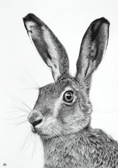 Harry Hare by Stephanie Lacey
