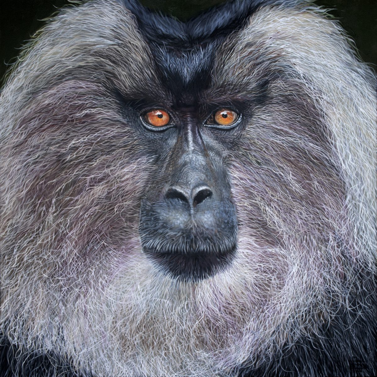 Lion Tailed Macaque by Steve Nayar