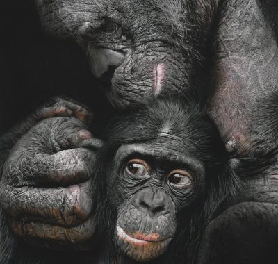 A painting by Szilvia Mate of bonobos called 'Father & Son'