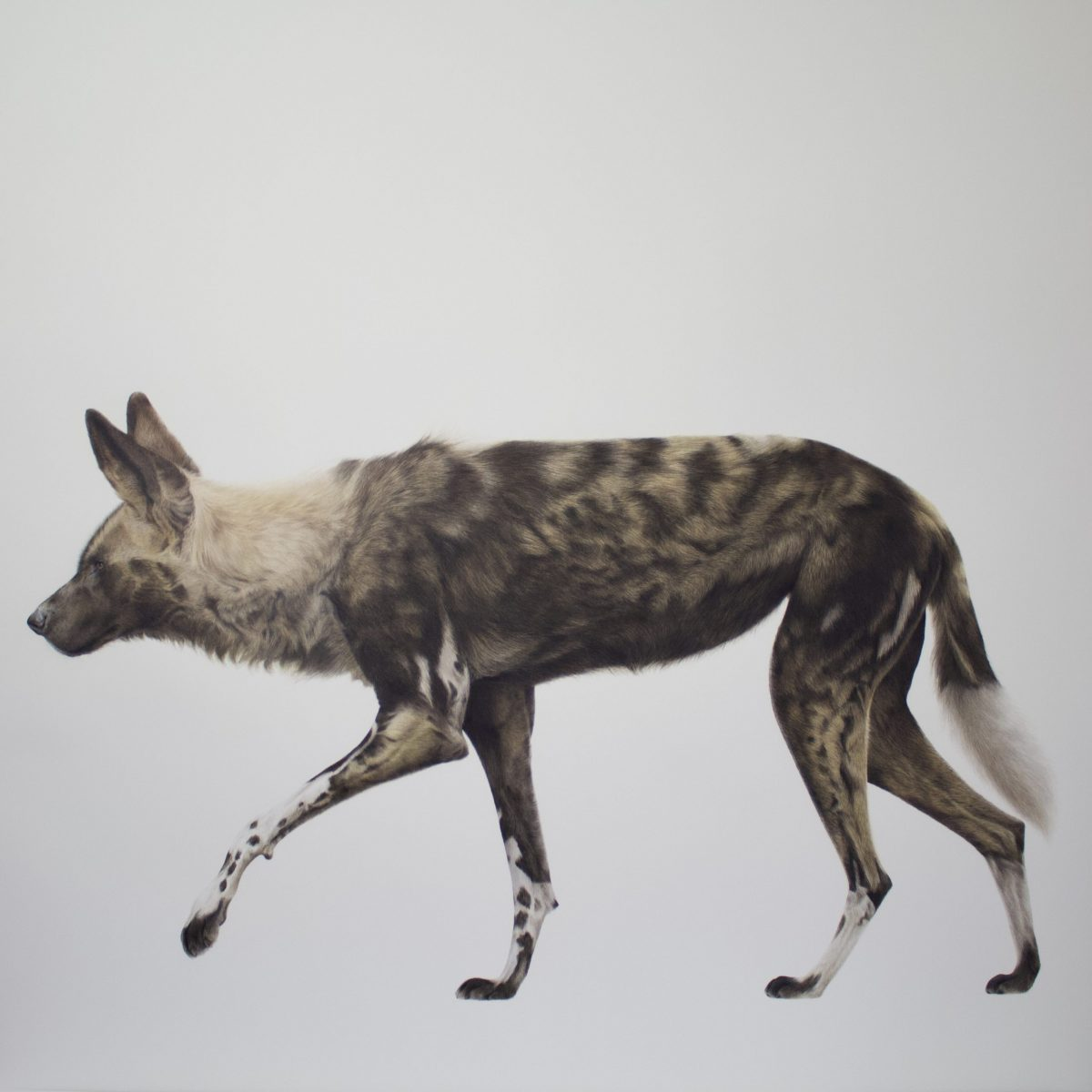 Painting by Zoe Fitchet called Lone Wolf
