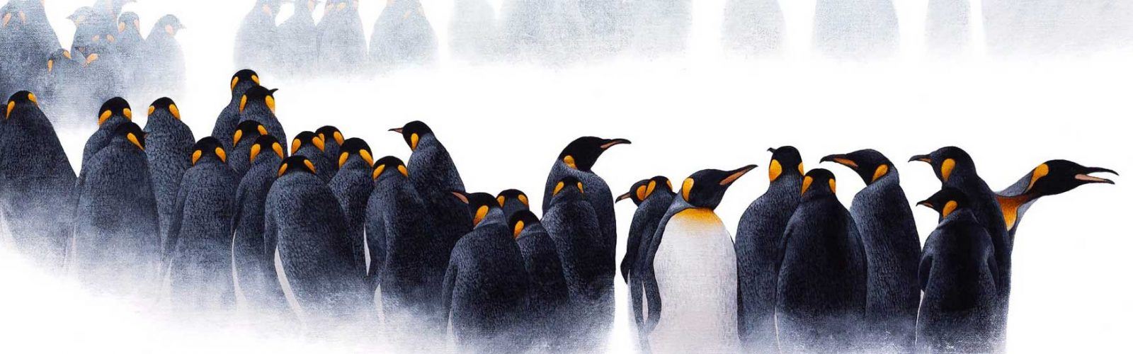 drawing of a waddle of emperor penguins