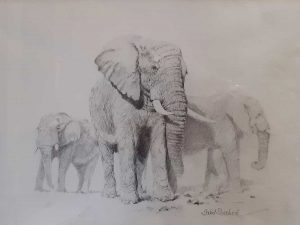 Buy thispencil original by David in aid of conservation